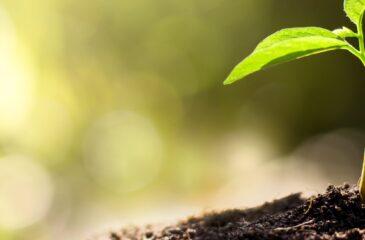 EUTR, EU's tømmerforordning - DGE Miljø- og Ingeniørfirma